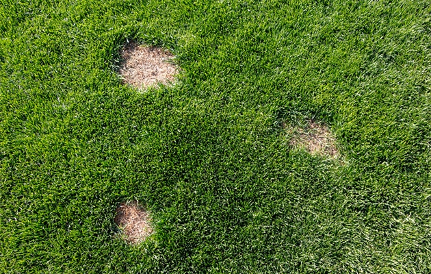 spring touch lawn disease control