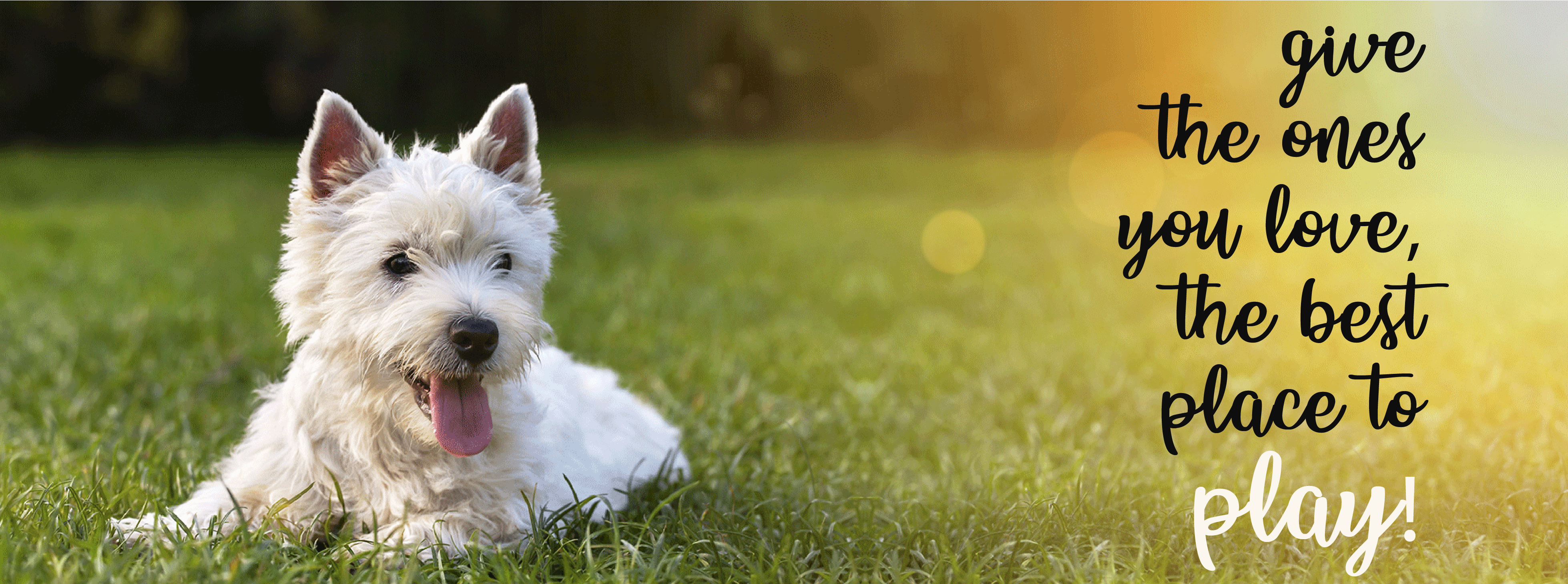 Flea and Tick Control - Services | Sping Touch Lawn & Pest